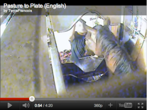 Screen shot of video shot in July, 2011, inside Temple Grandin designed slaughterhouse in Quebec. Scroll down for link footage.